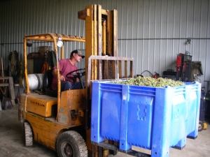 Loading Grapes